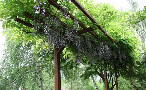 wisteria trellis design steel arbor with wisteria metal pinterest wisteria steel and arbors