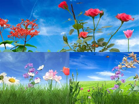 Flower Animation Wallpaper - animated flowers wallpapers desktop