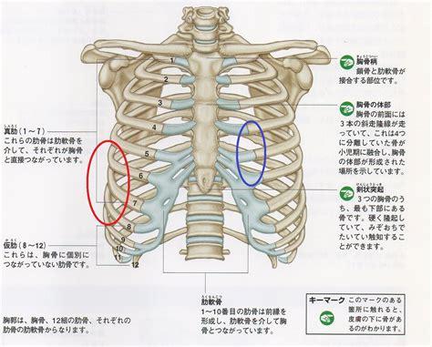 肋骨 骨折 痛み ピーク