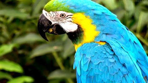 Beautiful Wallpapers For Desktop Amazon Parrot Hd Wallpapers