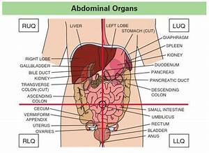 16 Best Referred Pain  Abdominal Quadrants Images On