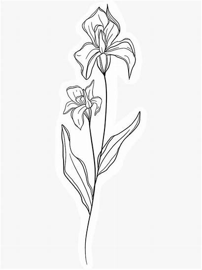 Flower Birth February Month Iris Tattoo Drawing