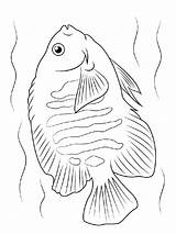 Coloring Angelfish Pages Fish Printable Recommended Mycoloring sketch template
