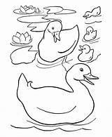 Duck Coloring Ducks Sheets Pond Printable Drawing Mewarnai Gambar Easy Ente Duckling Dibujos Colouring Patos Easter Preschool Colorear Ausmalbilder Toddlers sketch template