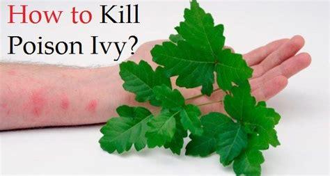 how to kill poison oak how to kill poison ivy