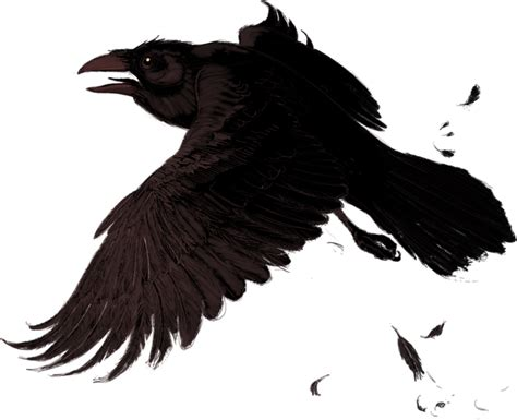 without crows png images with transparent backgrounds 57 photos