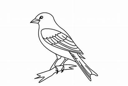 Burung Gambar Mewarnai Aneka Kumpulan Gagak Lovebird