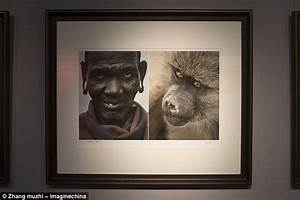 Museum changes exhibit comparing animals to black people ...
