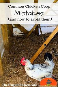 What Your Chicken Coop Should Include  Plus U2026mistakes To