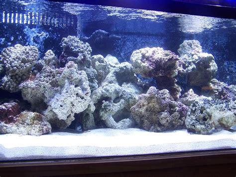 Reef Aquascaping Ideas by Reef Aquascaping Designs Gallon Bonsai Aquascaping