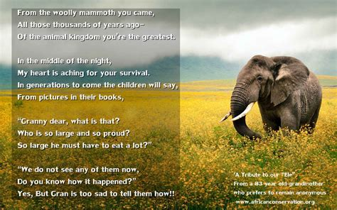 ?A Tribute to our ?Ele? with a mug of coffee at my elbow?   Elephant Poem   African Conservation