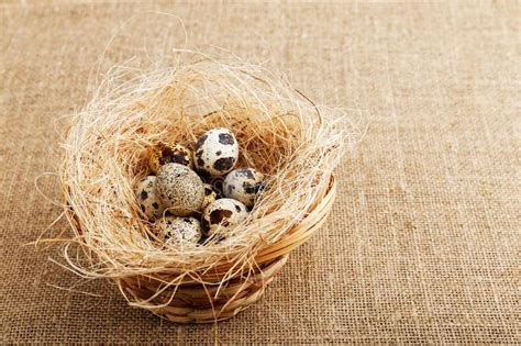 Sample design is not included in the download file. Closeup Quail Eggs Inside Of Little Basket On Sheet Of ...