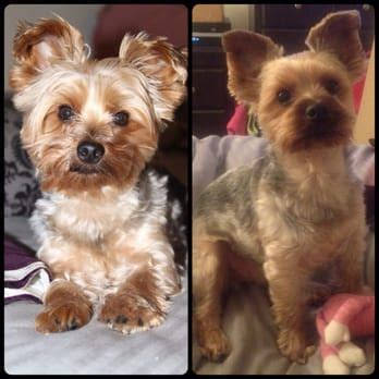 how much is a haircut at petsmart petco 60 photos 107 reviews pet 2910