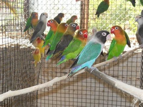 All Types Of Finches