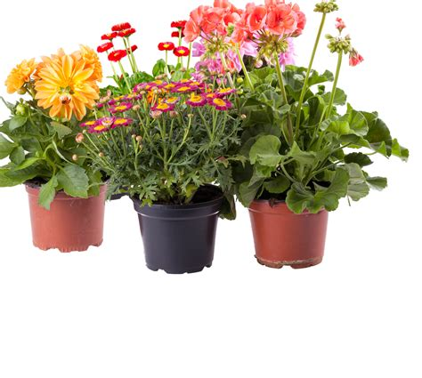 Window Potted Plants by Outdoor Potted Plants Png