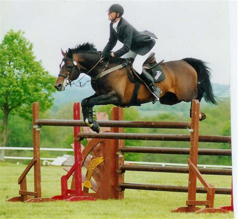 horse jumping brown rider horses equestrian hd animals wallpapers jumper showing