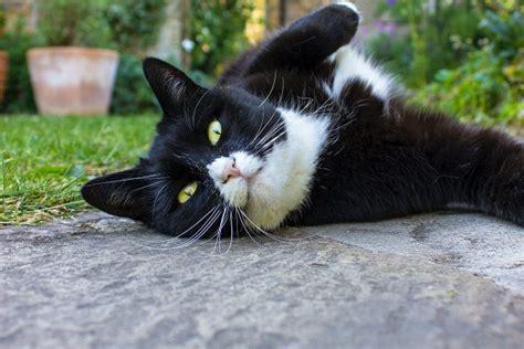 Mājdzīvnieki var samazināt stresu - Dzirciema aptieka