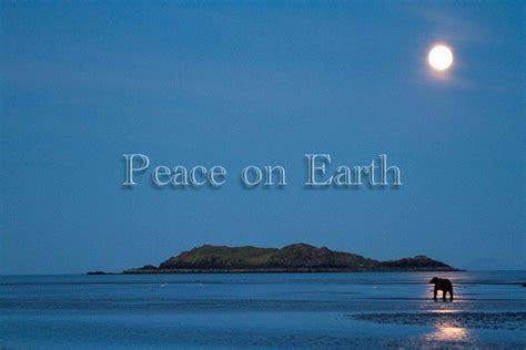 images on peace on earth update december 25 2012 the wildlife research institute