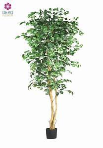 kunstlicher ficus benjamini grun ca 220cm With garten planen mit bonsai ficus benjamini