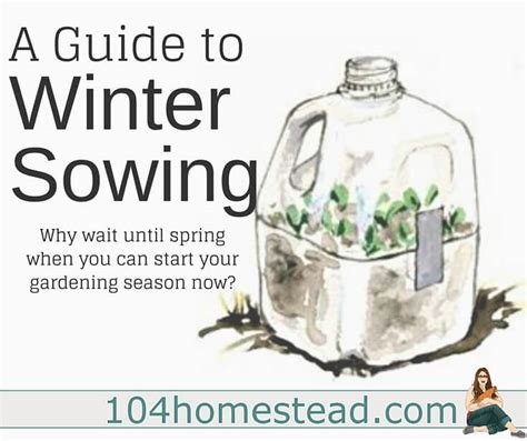 growing seeds in winter a guide to winter sowing starting seeds in winter