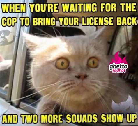 Sexy Cat Meme - when you wait for the cop and ghetto red hot