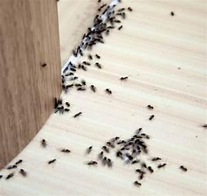 Fliegen Im Fensterrahmen : tipps und hausmittel gegen ameisen die wirklich helfen ~ Buech-reservation.com Haus und Dekorationen