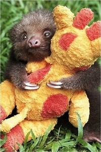 Baby Sloth hugging his toy | Animals | Pinterest