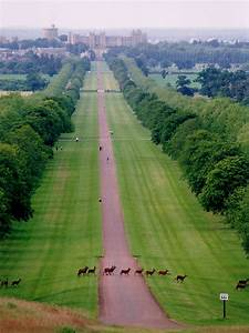 Windsor Great Park - Wikipedia