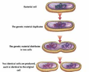 Cell Division - Mitosis and Meiosis | A-Level Biology ...