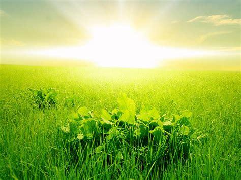 Green Wallpaper Hd Morning Green Grass Rising Sun ...