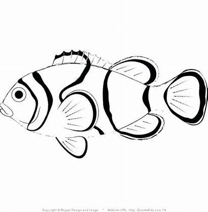 Fish Coloring Pages Drawing Printable Koi Step