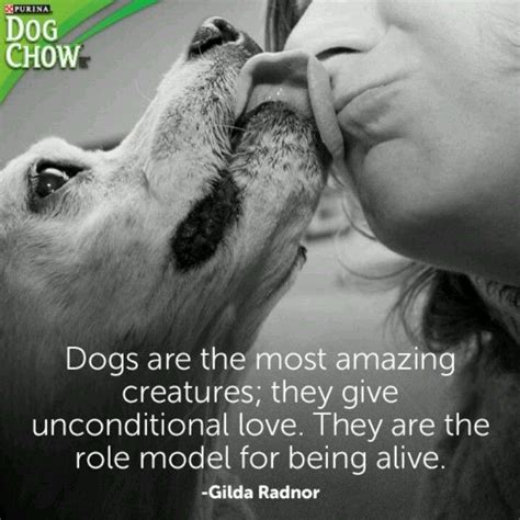 dogs unconditional love animal lover quotes pinterest
