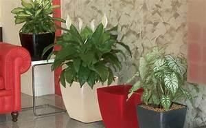 Marc De Café Plantes D Intérieur : du marc de caf pour les plantes une super astuce de grand m re trucs plantes d 39 int rieur ~ Melissatoandfro.com Idées de Décoration