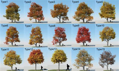 types of maple trees types of maple tree leaves 53479 dfiles maple trees pinterest tree leaves