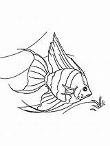 Coloring Angelfish Printable Pages Fish Angel Template Coloringbay Recommended Colors sketch template