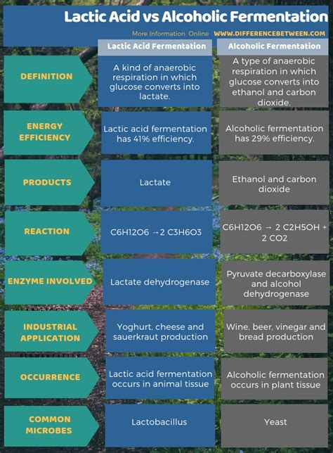 difference  lactic acid  alcoholic fermentation
