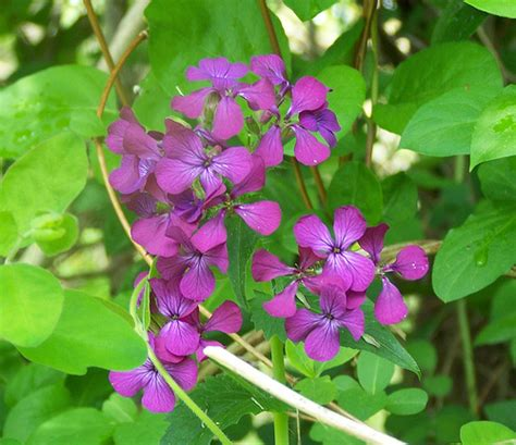 weeds with purple flowers purple flower weed flickr photo sharing