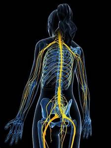 Five Tips To Protect Your Peripheral Nerves  U2013 Barefoot