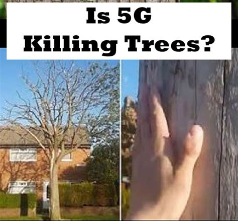 radiation killing trees rf radio frequency safe