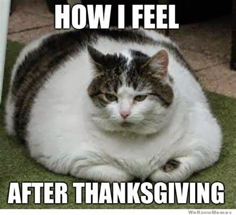 Grumpy Cat Coma Meme - brittanymariepowell post thanksgiving food coma funny pinterest posts thanksgiving and