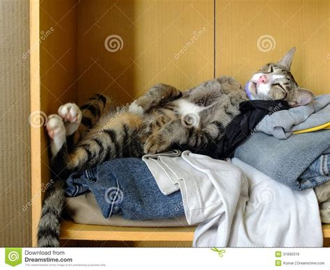 cat sleeping  clothes stock image image  clothes