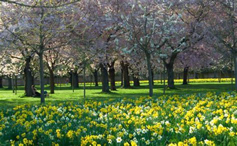 Japanischer Garten Heidelberg by Schwetzingen Die Japanische Kirschbl 252 Te