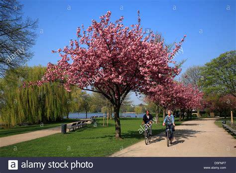 Japanischer Garten Düsseldorf Kirschblüte by Japanisch Stockfotos Japanisch Bilder Alamy