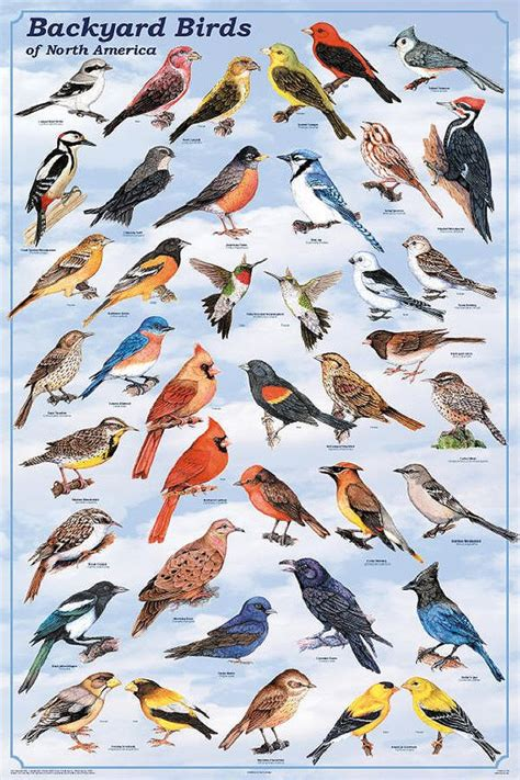 wild birds of north america backyard birds of north