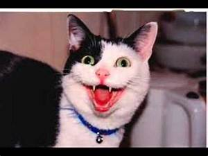 Image Gallery laughing cat