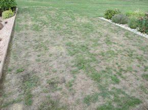 Comment Enlever Les Mauvaises Herbes : comment enlever les mauvaise herbes dans le gazon ou ~ Melissatoandfro.com Idées de Décoration