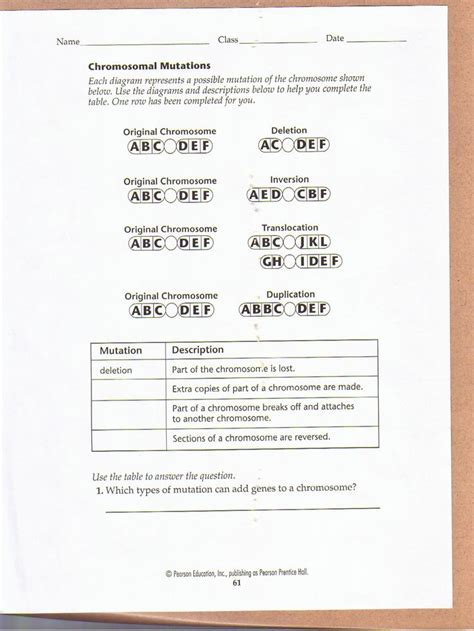 chemistry of the gene worksheet answers chromosomal mutations worksheet education biology biology classroom teaching biology