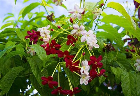 19 Stunning Climbing Plants Perfect For Trellis And Arbors