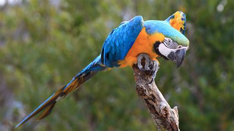 macaw parrot macaw parrot hd wallpapers high definition free background