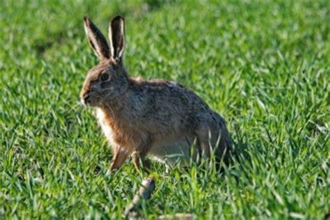 lebendfalle selber bauen kaninchenfalle selber bauen so gelingt eine lebendfalle
